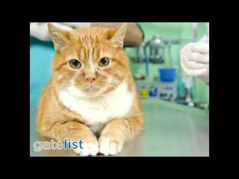 Saratoga Veterinary Hospital Saratoga CA 95070