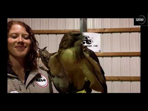 Amazing Eagle Talons  + Rise Raptor Project  + Dale Hollow Nest