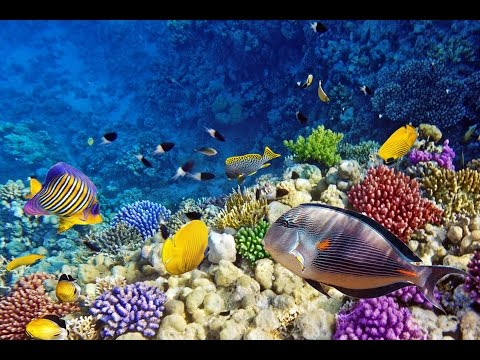 Top Tourist Attractions in Eilat: Travel Guide Israel