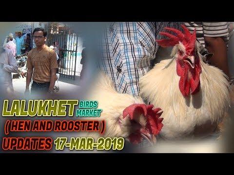 Lalukhet Sunday Hen & Roster Market 17-3-2019 Updates (Jamshed Asmi Informative Channel)  Urdu/Hindi