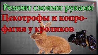 Цекотрофы и копрофагия у кроликов,что такое цекотрофы
