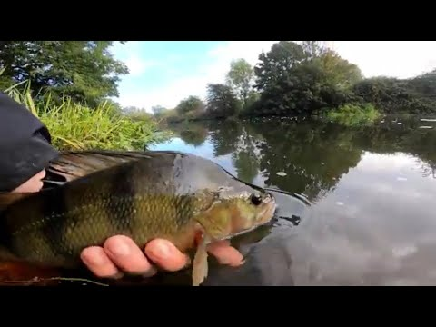 PERCH FISHING THE RIVER GREAT OUSE! (Friends PB Smashed!)