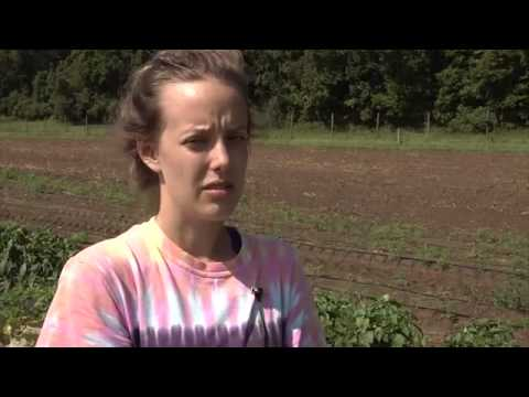 UMass Amherst Student Farmers Team Up with Big Y Amherst