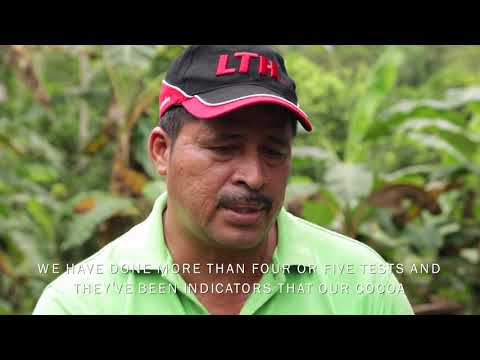 Putting Central American cacao farmers on the map