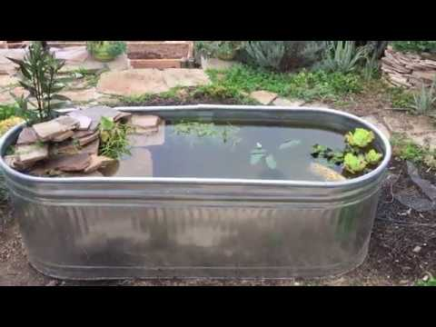 Building a mini pond using a stock tank youtube for Koi pond tank