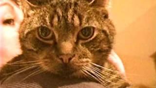 boyz ii men it s so hard to say goodbye my cat kiki