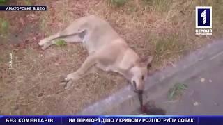 На території депо в Кривому Розі потруїли собак