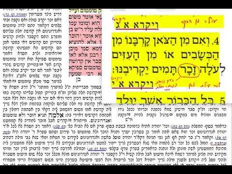 הדף היומי בכורות דף מב 42 רביעי כ״ד אייר תשע״ט. Daf yomi Bechoros daf 42. שמואל נבון ירושלים