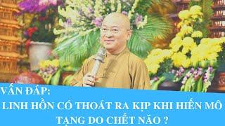Vấn đáp: LINH HỒN có thoát ra kịp khi Hiến Mô Tạng do CHẾT NÃO ? | Thích Nhật Từ