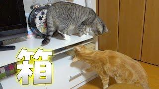 猫ズ、どうにか箱を取り出したい - the cats really want to take the box out -