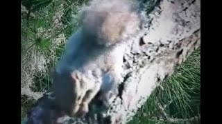 AEF NEFL Eagles  8-30-14  Something Squirrely at Romeo & Juliet