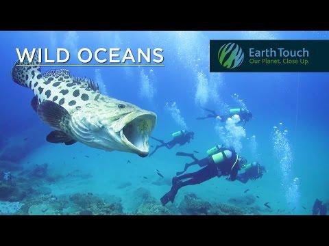 Moray eel attacks underwater cameraman