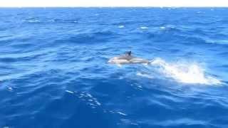 Dolphin jump on catamaran trip La Linea - Saidia