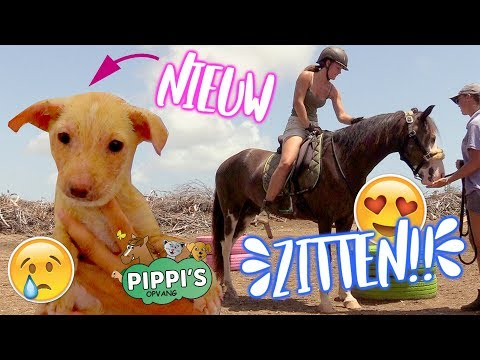 Nieuwe straat puppy & voor het eerst op Jip zitten! | felinehoi
