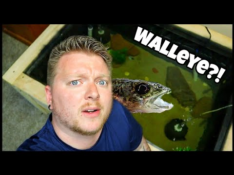 WOOD Pond for RESCUE Fish! W/ Milliken Fishing
