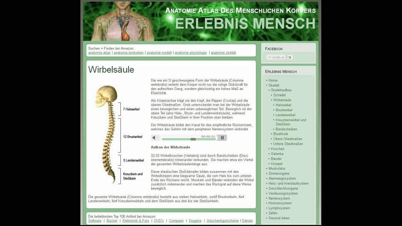 Schön Vertebralis Anatomie Zeitgenössisch - Menschliche Anatomie ...