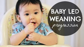 baby led weaning blw progression 6 10 months