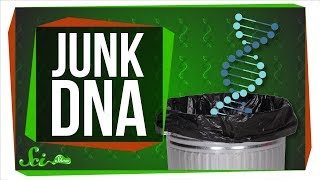 How Much Junk Is in Your DNA Trunk?