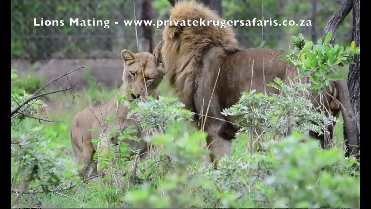 how to make safari private