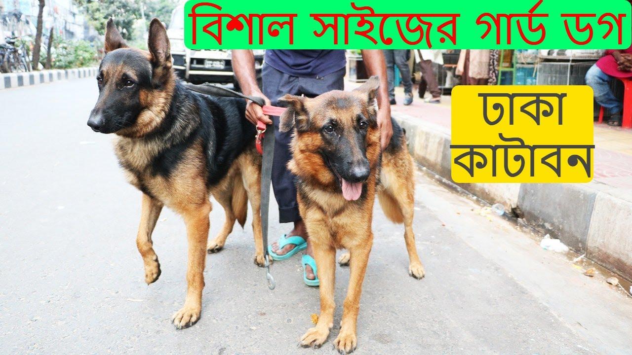 গার্ড ডগ কিনুন ঢাকা কাটাবন থেকে | German Shepherd | Dog Price | Dhaka Vlogs