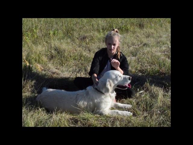 Знакомство с моей собакой//#золотистыйретривер