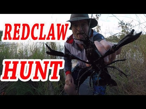 REDCLAW CRAYFISH HUNT Feat BASS