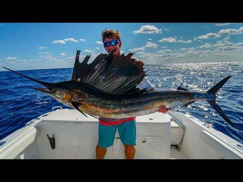 Why NOBODY Eats This FISH- Catch Clean Cook -Sailfish (Kola Fish)