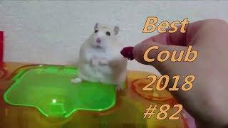 Best Coub 2018 лучшие приколы ноябрь #82