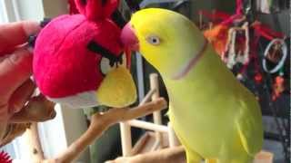 Bowie talks to Angry Bird