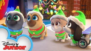 Merry Christmas from Bingo, Rolly, and Keia! 🎁 | Puppy Dog Pals | Disney Junior