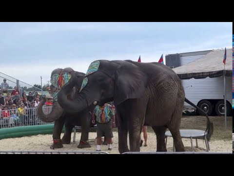 2013 Freeborn County Fair - Elephant Show