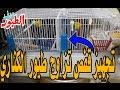 تجهيز قفص التزاوج لطيور الكناري - cage for mating canaries