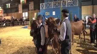 Concours d'animaux au salon de l'agriculture de paris.