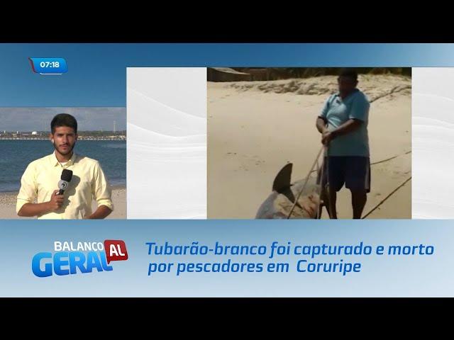 Tubarão-branco foi capturado e morto por pescadores em praia de Coruripe