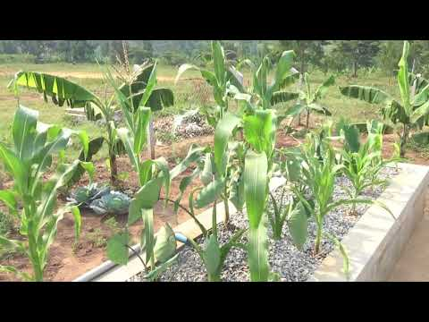Aquaponics Systems in our Kinships | Kinship United