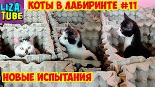 Лабиринт для кошек #11 😺 Карамелька РАЗРУШИТЕЛЬНИЦА 😂 Три кота проходят лабиринт 🌸 \ LizaTube