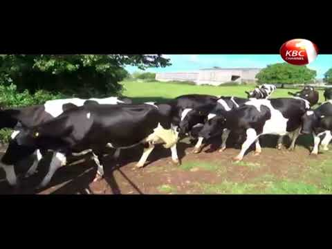 Dairy farmers equipped with skills on better livestock management