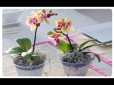 Неприхотливые растения для офиса