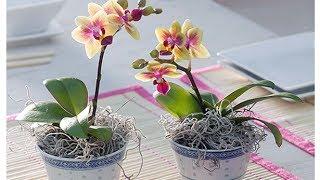 видео Неприхотливые растения для офиса