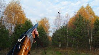 Охота на тетерева осенью с подхода Black grouse hunting Охота 2021