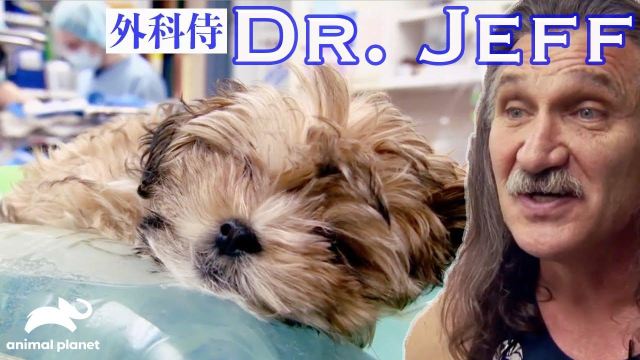 【外科侍ジェフ先生】骨折してしまった子犬「デンバー動物クリニックS1」より人気シーンハイライト