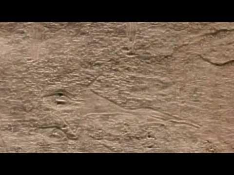 Tarim mummies bulgarian link