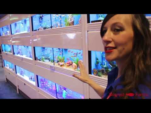 Tropical Fish, Black Rams And More From Segrest Farms