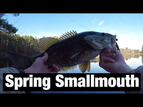 Spring SMALLMOUTH Bass Fishing!