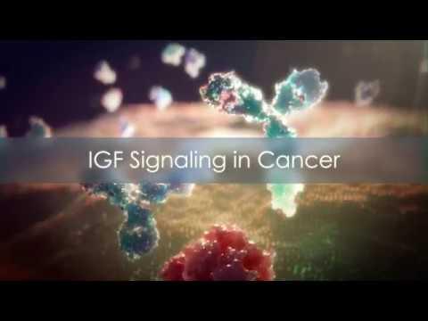 IGF Oncology