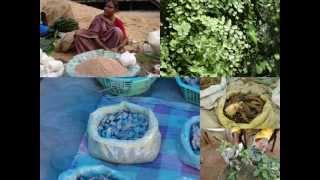 Medicinal Rice P5 Formulations for Erythrina Overdose: Pankaj Oudhia