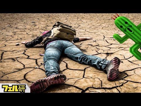 【衝撃】水のない砂漠で生き残る方法