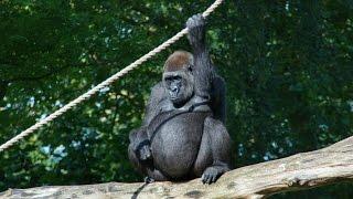 Burgers Zoo Arnhem