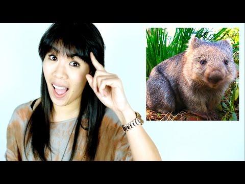 Wie Wombats kacken