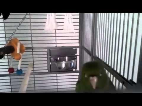Chicka en Meastro – Eerste dag in nieuwe kooi